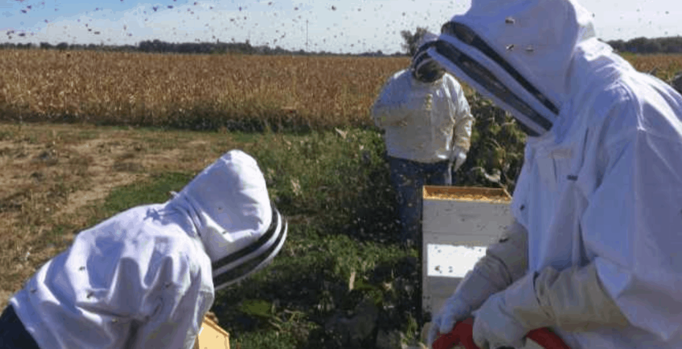 What I Learned About Ministry From Beekeeping